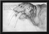 Albrecht Durer (Head of a walrus) Prints