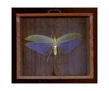 Bug Box Photographic Print by Keith Skelton
