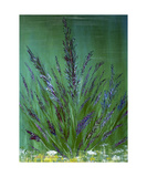 Lavender Photographic Print by Dick Bourgault