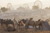 Pushkar Camel Fair, Pushkar, Rajasthan, India Photographic Print by Peter Adams