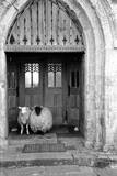 Church Sheep Photographic Print by Maurice Ambler