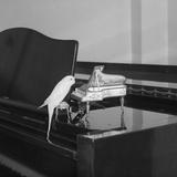 Chirpy Tunes Reproduction photographique par Ron Gerelli
