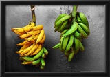 Yellow and Green Bananas Poster