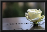 White Rose at September 11 Memorial Photo