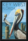 Key West, Florida - Brown Pelican Prints