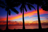 Palm Tree Sunset Prints