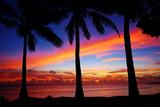 Puesta de sol y silueta de palmera Lámina
