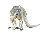 Boxer (Red Kangaroo), 2012 Giclee Print by Mark Adlington