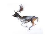 Evening Buck (Fallow Deer), 2007 Lámina giclée por Mark Adlington