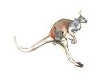 Boing, (Red Kangaroo), 2012 Giclée-tryk af Mark Adlington