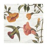 Vintage Hummingbird II Prints