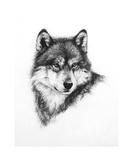 Wolf Fotografisk tryk af Heather Theurer