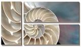 Nautilus Print by Andrew Levine