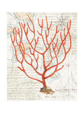 Textured Coral I Poster by Avery Tillmon
