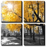Park Pretty II Prints by Assaf Frank