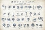 Botany Tab VIII Indigo and White Posters af Hugo Wild
