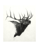 Elk Photographic Print by Heather Theurer