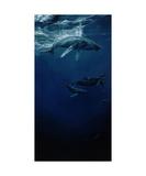 Whalesong Fotografisk tryk af Heather Theurer