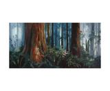 Redwood Faeries Fotografisk tryk af Heather Theurer