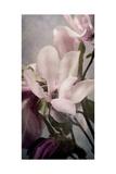 Magnolia Memories 1 Premium Giclee Print by Julie Greenwood