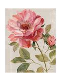 Harmonious Rose Linen Poster von Lisa Audit