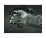 Dapple Photographic Print by Heather Theurer