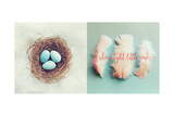Vintage Nest of Feathers Premium Giclee Print by Vicki Dvorak