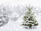 Fir Tree in Thick Snow Photographic Print by  Smileus