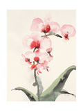 Morning Orchid 2 Premium Giclee Print by Karin Johannesson