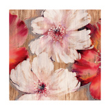 Rustic Blossoms Premium Giclee Print by Jurgen Gottschlag