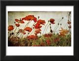 Orange Flower Patch Framed Photographic Print by Mia Friedrich