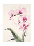 Morning Orchid 1 Premium Giclee Print by Karin Johannesson