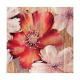 Rustic Blooms Premium Giclee Print by Jurgen Gottschlag
