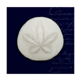 Nautical Blue Sand Dollar Premium Giclee Print by Julie Greenwood