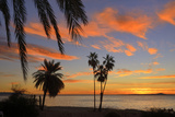 Palm Trees at Sunset in La Ventana, Baja California Sur, Mexico, Photographic Print by Christian Heeb