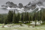 Horses Grazing in the Meadow Blanketed in Summer Snow, Dolomites, Alto Adige or South Tyrol, Italy Photographic Print by Stefano Politi Markovina