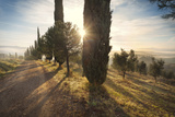 Italy, Tuscany, Siena District, Orcia Valley, Countryroad Near San Quirico D'Orcia. Photographic Print by Francesco Iacobelli
