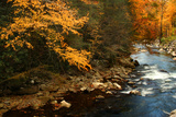 Golden foliage reflected in mountain creek, Smoky Mountain National Park, Tennessee, USA Photographic Print by Anna Miller