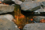 Reflections of autumn color in rocky creek, Smoky Mountains National Park, Tennessee, USA Photographic Print by Anna Miller