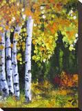 Autumn Aspen II Stretched Canvas Print