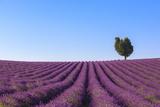 France, Provence-Alpes-Cote D'Azur, Plateau of Valensole, Lavender Field Photographic Print by Andrea Pavan