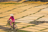 Cycling Past Drying Sheets of Mien Noodle, Nr Hanoi, Vietnam Lámina fotográfica por Peter Adams