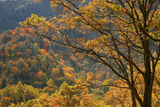 Fall foliage colors in Smoky Mountains National Park, Tennessee, USA Photographic Print by Anna Miller