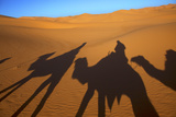 Shadows of Camels and Riders in the Desert, Merzouga, Morocco, North Africa Photographic Print by Neil Farrin