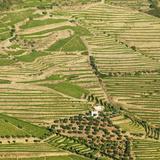 Portugal, Douro, Terraced Vineyards and Farm Lámina fotográfica por Shaun Egan