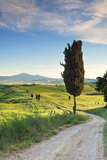 Italy, Tuscany, Siena District, Orcia Valley, Country Road Near Pienza. Photographic Print by Francesco Iacobelli