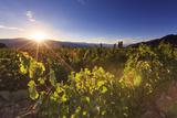 Argentina, Salta, Cafayate, Torrontes Grape Wineries Photographic Print by Michele Falzone