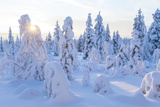 Winter in Riisitunturi National Park, Lapland, Finland Photographic Print by Peter Adams
