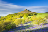 United Kingdom, England, North Yorkshire, Great Ayton. Spring Bluebells at Roseberry Topping. Photographic Print by Nick Ledger