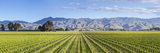 Picturesque Vineyard, Blenheim, Marlborough, South Island, New Zealand Photographic Print by Doug Pearson